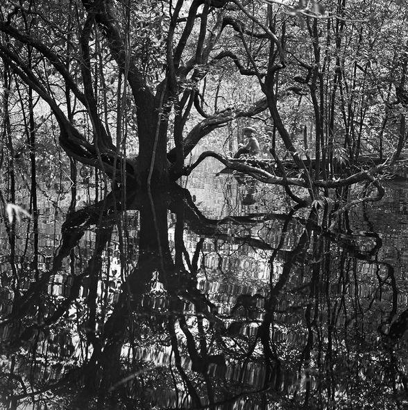 Ca s'est passé en octobre ! Igapos-amazonia-c-1958
